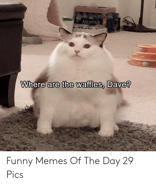 Funny, Memes, and Day: Where are the waffles, Dave? Funny Memes Of The Day 29 Pics