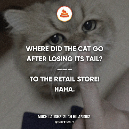 Memes, Hilarious, and Retail: WHERE DID THE CAT GO  AFTER LOSING ITS TAIL?  TO THE RETAIL STORE!  HAHA.  MUCH LAUGHS. SUCH HILARIOUS.  @SHITBOLT