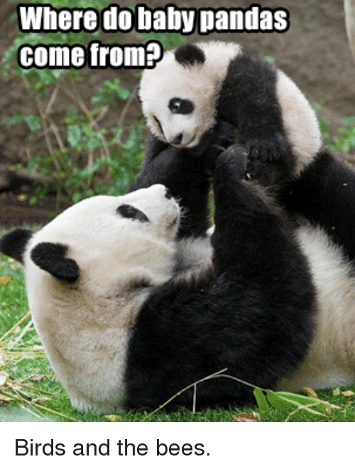 Funny Birds And Baby Where Do Baby Pandas Come From Birds And The