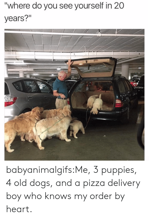 "Dogs, Pizza, and Puppies: ""where do you see yourself in 20  years?"" babyanimalgifs:Me, 3 puppies, 4 old dogs, and a pizza delivery boy who knows my order by heart."