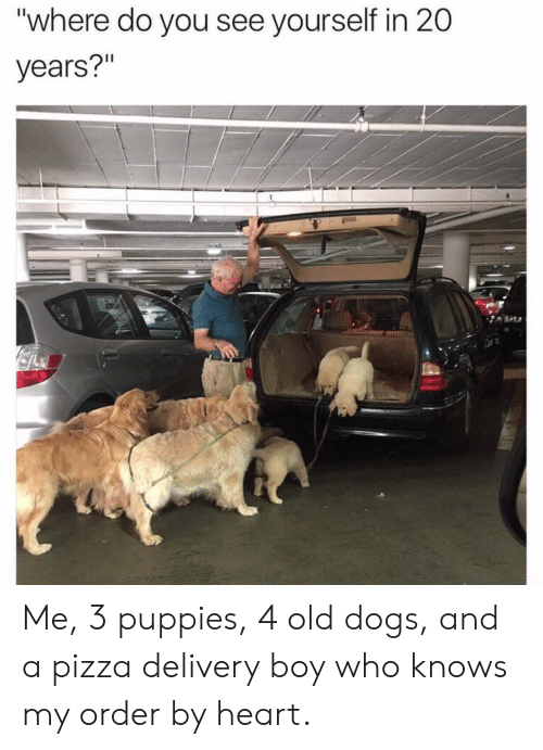 "Dogs, Pizza, and Puppies: ""where do you see yourself in 20  years?"" Me, 3 puppies, 4 old dogs, and a pizza delivery boy who knows my order by heart."