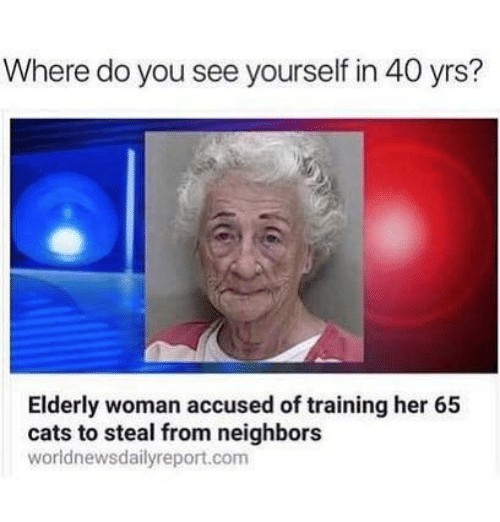 Cats, Memes, and Neighbors: Where do you see yourself in 40 yrs?  Elderly woman accused of training her 65  cats to steal from neighbors  worldnewsdailyreport.com
