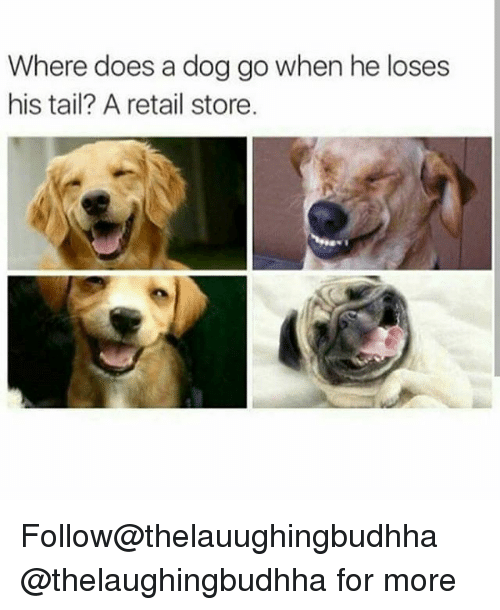 Memes, 🤖, and Dog: Where does a dog go when he loses  his tail? A retail store. Follow@thelauughingbudhha @thelaughingbudhha for more