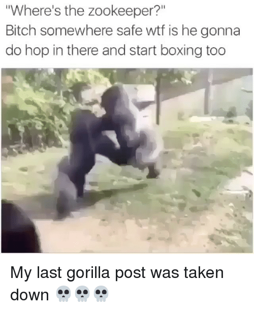 "Bitch, Boxing, and Memes: Where's the zookeeper?""  Bitch somewhere safe wtf is he gonna  do hop in there and start boxing too My last gorilla post was taken down 💀💀💀"