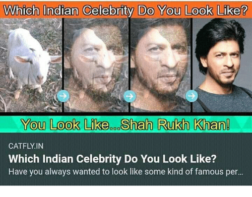 Which Indian Celebrity Do You Look Like You Look Likeen Shah Rukh