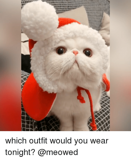 Memes, 🤖, and You: which outfit would you wear tonight? @meowed
