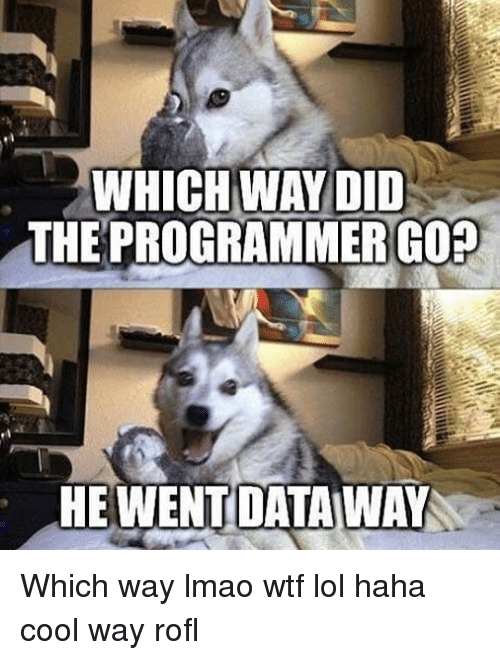 Lmao, Lol, and Memes: WHICH WAYDID  THE PROGRAMMERGOR  HEWENTDATAWAY Which way lmao wtf lol haha cool way rofl