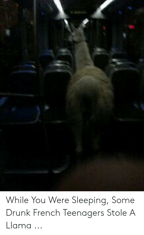 While You Were Sleeping Some Drunk French Teenagers Stole A Llama