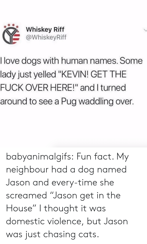 "Cats, Dogs, and Love: Whiskey Riff  @WhiskeyRiff  I love dogs with human names. Some  lady just yelled ""KEVIN! GET THE  FUCK OVER HERE!"" and I turned  around to see a Pug waddling over. babyanimalgifs:  Fun fact. My neighbour had a dog named Jason and every-time she screamed ""Jason get in the House"" I thought it was domestic violence, but Jason was just chasing cats."