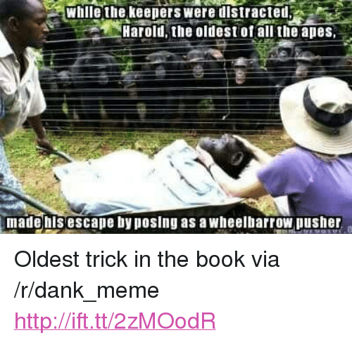 """Dank, Meme, and Book: whlle the keepers were distrcted  Harold the oldest ofall the apes  made hisescape by posing as a wheelbarrow pusher <p>Oldest trick in the book via /r/dank_meme <a href=""""http://ift.tt/2zMOodR"""">http://ift.tt/2zMOodR</a></p>"""