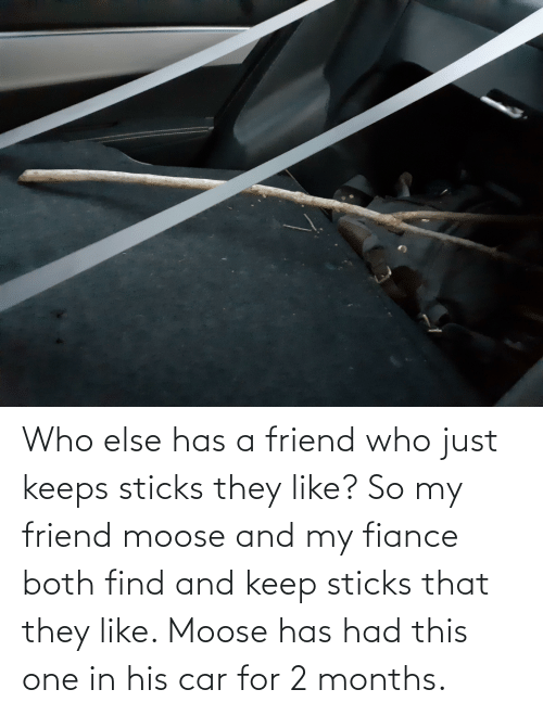 Fiance, Sticks, and Car: Who else has a friend who just keeps sticks they like? So my friend moose and my fiance both find and keep sticks that they like. Moose has had this one in his car for 2 months.