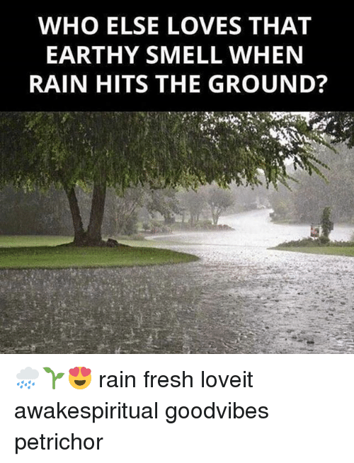 Fresh, Memes, and Smell: WHO ELSE LOVES THAT  EARTHY SMELL WHEN  RAIN HITS THE GROUND? ⛆🌧🌱😍 rain fresh loveit awakespiritual goodvibes petrichor