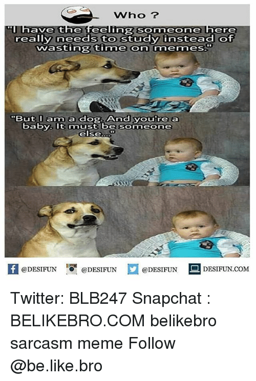 Be Like, Meme, and Memes: Who ?  have the feeling Someone here  really needs to study instead of  wasting time on memes.  But I am a dog. And youre a  baby. It must be someone  else  K @DESIFUN 1可@DESIFUN  @DESIFUN  DESIFUN.COM Twitter: BLB247 Snapchat : BELIKEBRO.COM belikebro sarcasm meme Follow @be.like.bro