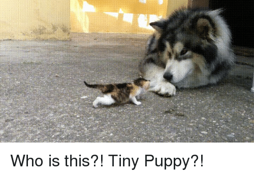 Funny, Puppy, and Who: Who is this?! Tiny Puppy?!
