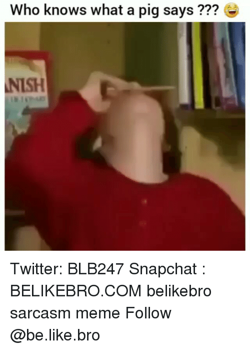 Be Like, Meme, and Memes: Who knows what a pig says ???  NISH Twitter: BLB247 Snapchat : BELIKEBRO.COM belikebro sarcasm meme Follow @be.like.bro