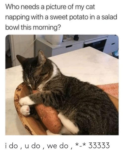 Potato, A Picture, and Bowl: Who needs a picture of my cat  napping with a sweet potato in a salad  bowl this morning? i do , u do , we do , *-* 33333