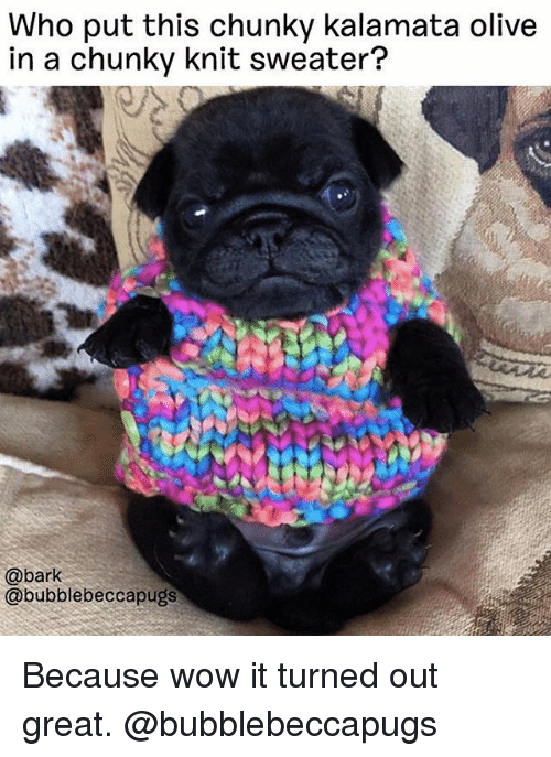Memes, Wow, and 🤖: Who put this chunky kalamata olive  in a chunky knit sweater?  @bark  @bubblebeccapugs Because wow it turned out great. @bubblebeccapugs