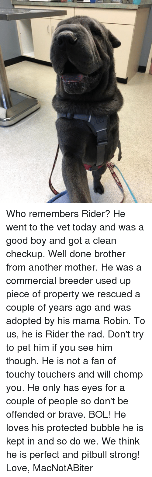 Love, Memes, and Pitbull: Who remembers Rider? He went to the vet today and was a good boy and got a clean checkup. Well done brother from another mother. He was a commercial breeder used up piece of property we rescued a couple of years ago and was adopted by his mama Robin. To us, he is Rider the rad. Don't try to pet him if you see him though. He is not a fan of touchy touchers and will chomp you. He only has eyes for a couple of people so don't be offended or brave. BOL! He loves his protected bubble he is kept in and so do we. We think he is perfect and pitbull strong!   Love, MacNotABiter