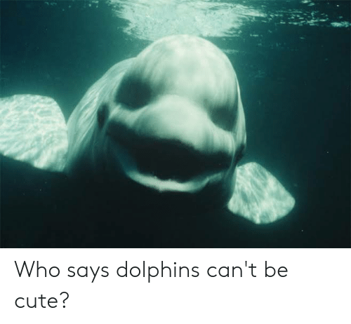 Cute, Dolphins, and Who: Who says dolphins can't be cute?