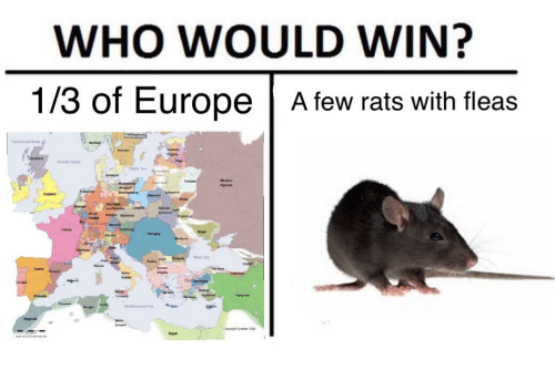 Dank Memes, Wins, and Win: WHO WOULD WIN?  1/3 of Europe A few rats with fleas