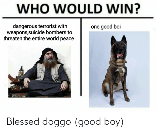 Blessed, Good, and Suicide: WHO WOULD WIN?  dangerous terrorist with  weapons,suicide bombers to  threaten the entire world peace  one good boi Blessed doggo (good boy)