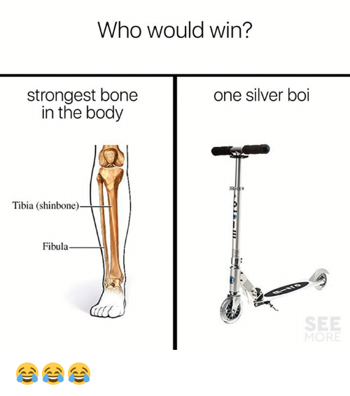 Who Would Win One Silver Boi Strongest Bone In The Body Tibia