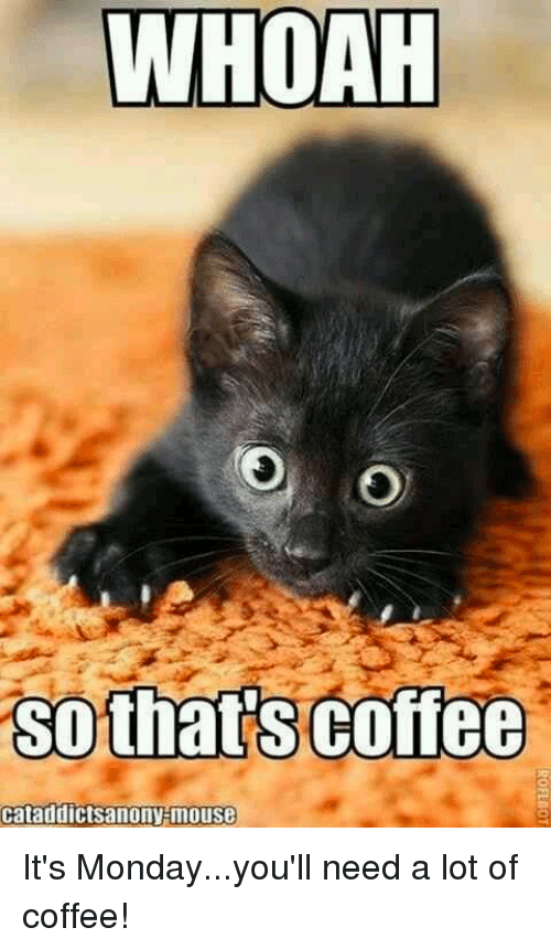 Whoah so thats coffee cataddictsanony mouse its mondayyoull need a memes mondays and coffee whoah so thats coffee cataddictsanony mouse its monday altavistaventures Image collections