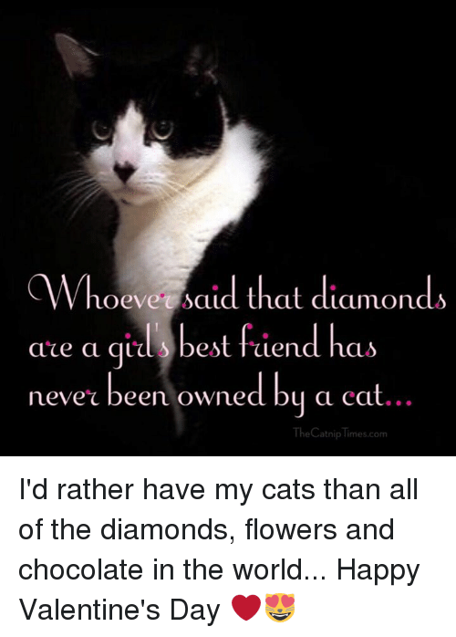 Cats, Memes, and Valentine's Day: Whoeve said that diamonds  are a ail's best fiend has  ace a q 10 best faend has  never been owned bu a cat  he Catnip Times.com  TheCatnip imes.com I'd rather have my cats than all of the diamonds, flowers and chocolate in the world... Happy Valentine's Day ❤️😻