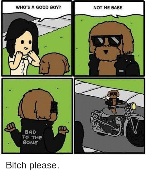 Bad, Bitch, and Memes: WHO'S A GOOD BOY?  BAD  TO THE  BONE  NOT ME BABE Bitch please.
