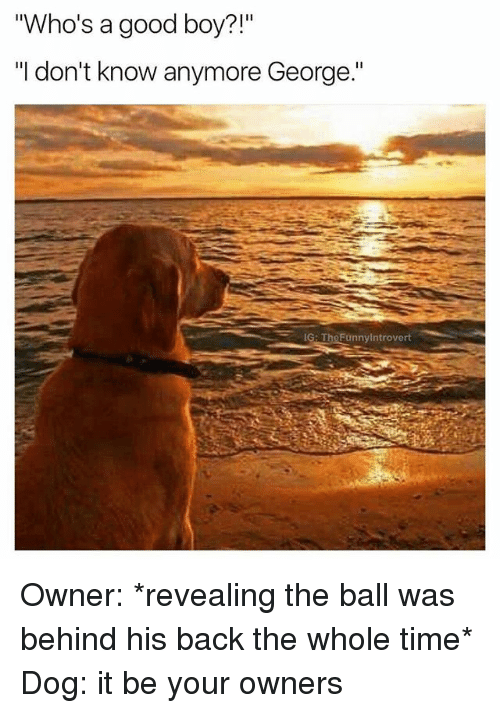 "Good, Time, and Dank Memes: Who's a good boy?!""  ""I don't know anymore George.""  IG: TheFunnylntrovert Owner: *revealing the ball was behind his back the whole time* Dog: it be your owners"
