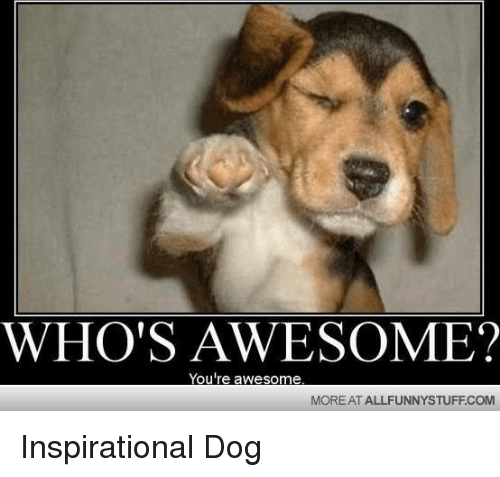 You Re Amazing Animals: WHO'S AWESOME? You're Awesome MORE AT ALLFUNNYSTUFFCOM