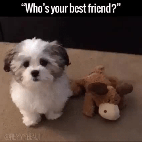 Whos Your Best Friend Dog Gif