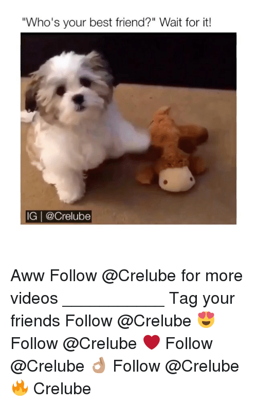 """Aww, Best Friend, and Friends: """"Who's your best friend?"""" Wait for it!  IG 