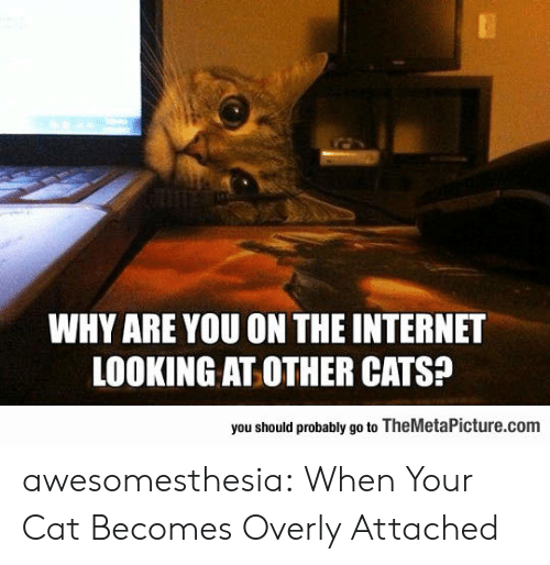 Cats, Internet, and Tumblr: WHY ARE YOU ON THE INTERNET  LOOKING AT OTHER CATS?  you should probably go to TheMetaPicture.com awesomesthesia:  When Your Cat Becomes Overly Attached