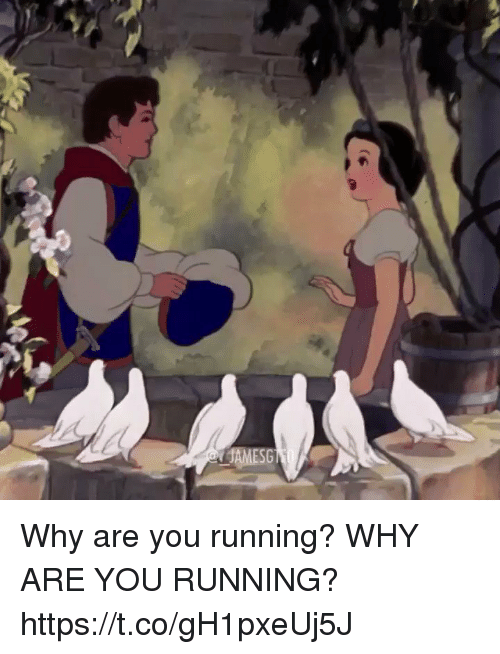 Home Market Barrel Room Trophy Room ◀ Share Related ▶ Girl Memes Running why you are you Why Are You Running Are Https Before Your From The next Why are you running? WHY ARE YOU RUNNING? https://t.co/gH1pxeUj5J collect meme → Embed it next → Why are you running? WHY ARE YOU RUNNING? httpstcogH1pxeUj5J Meme Girl Memes Running why you are you Why Are You Running Are Https Girl Memes Girl Memes Running Running why why you you are you are you Why Are You Running Why Are You Running Are Are Https Https found @ 134 likes ON 2018-02-13 19:47:42 BY me.me source: twitter view more on me.me