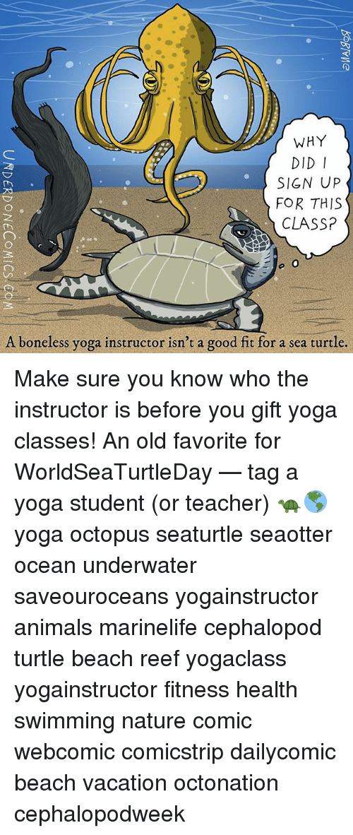 Animals, Memes, and Teacher: WHY  DID I  SIGN UP  FOR THIS  CLASSP  A boneless yoga instructor isn't a good fit for a sea turtle. Make sure you know who the instructor is before you gift yoga classes! An old favorite for WorldSeaTurtleDay — tag a yoga student (or teacher) 🐢🌎 yoga octopus seaturtle seaotter ocean underwater saveouroceans yogainstructor animals marinelife cephalopod turtle beach reef yogaclass yogainstructor fitness health swimming nature comic webcomic comicstrip dailycomic beach vacation octonation cephalopodweek