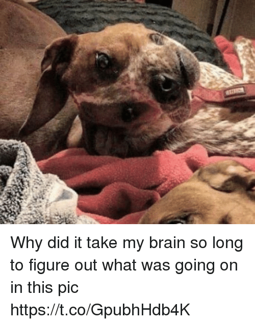 Brain, Girl Memes, and Why: Why did it take my brain so long to figure out what was going on in this pic https://t.co/GpubhHdb4K