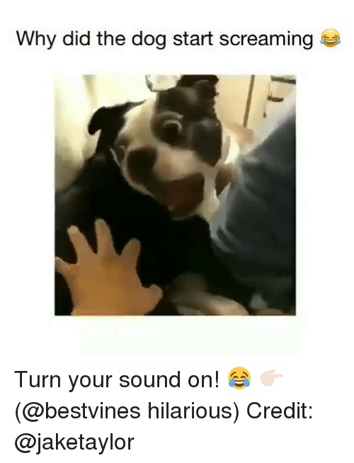 Memes, Hilarious, and 🤖: Why did the dog start screaming Turn your sound on! 😂 👉🏻(@bestvines hilarious) Credit: @jaketaylor