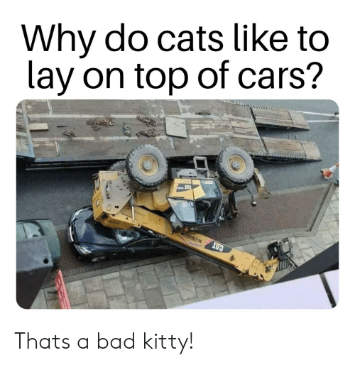 Bad, Cars, and Cats: Why do cats like to  lay on top of cars? Thats a bad kitty!