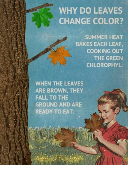 WHY DO LEAVES CHANGE COLOR? SUMMER HEAT BAKES EACH LEAF COOKING OUT ...