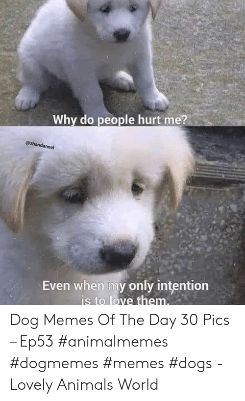 Animals, Dogs, and Love: Why do people hurt me?  @zhandannel  Even when my only intention  is to love them. Dog Memes Of The Day 30 Pics – Ep53 #animalmemes #dogmemes #memes #dogs - Lovely Animals World