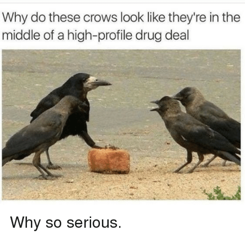 The Middle, Drug, and Crows: Why do these crows look like they're in the  middle of a high-profile drug deal Why so serious.