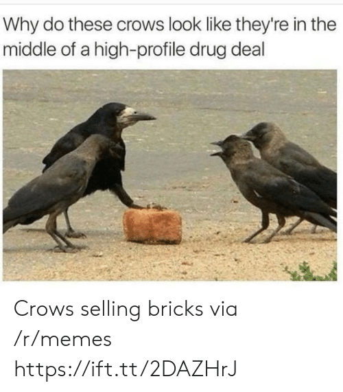 Memes, The Middle, and Drug: Why do these crows look like they're in the  middle of a high-profile drug deal Crows selling bricks via /r/memes https://ift.tt/2DAZHrJ