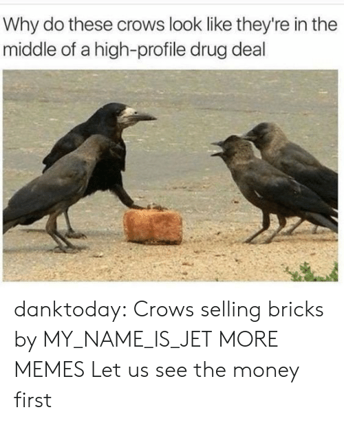 Dank, Memes, and Money: Why do these crows look like they're in the  middle of a high-profile drug deal danktoday:  Crows selling bricks by MY_NAME_IS_JET MORE MEMES  Let us see the money first