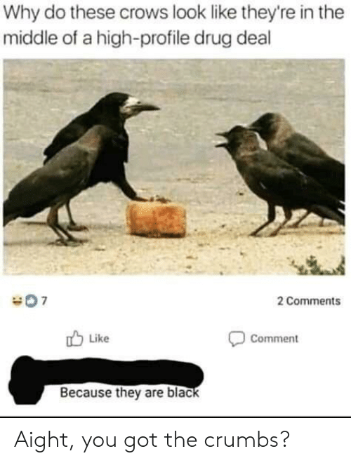 Black, The Middle, and Drug: Why do these crows look like they're in the  middle of a high-profile drug deal  2 Comments  Like  Comment  Because they are black Aight, you got the crumbs?