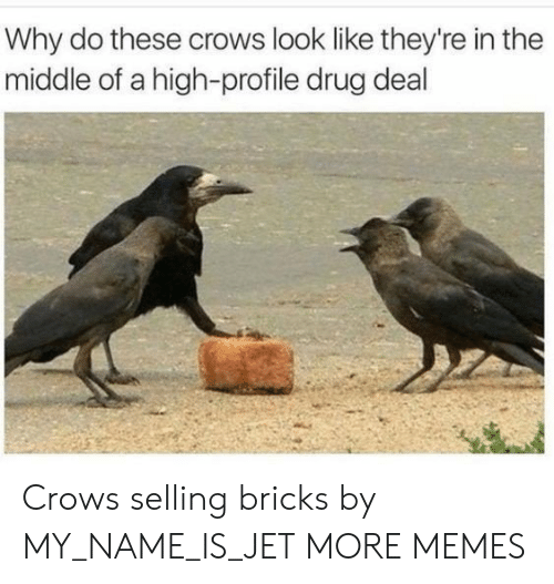 Dank, Memes, and Target: Why do these crows look like they're in the  middle of a high-profile drug deal Crows selling bricks by MY_NAME_IS_JET MORE MEMES