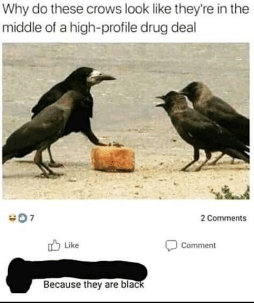 Black, The Middle, and Drug: Why do these crows look like they're in the  middle of a high-profile drug deal  2 Comments  Like  Comment  Because they are black