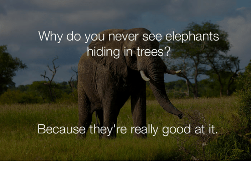 Why Do You Never See Elephants Hiding in Trees? Because