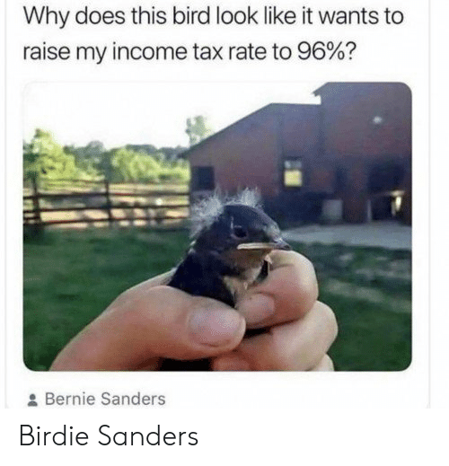 Bernie Sanders, Bernie, and Tax: Why does this bird look like it wants to  raise my income tax rate to 96%?  Bernie Sanders Birdie Sanders