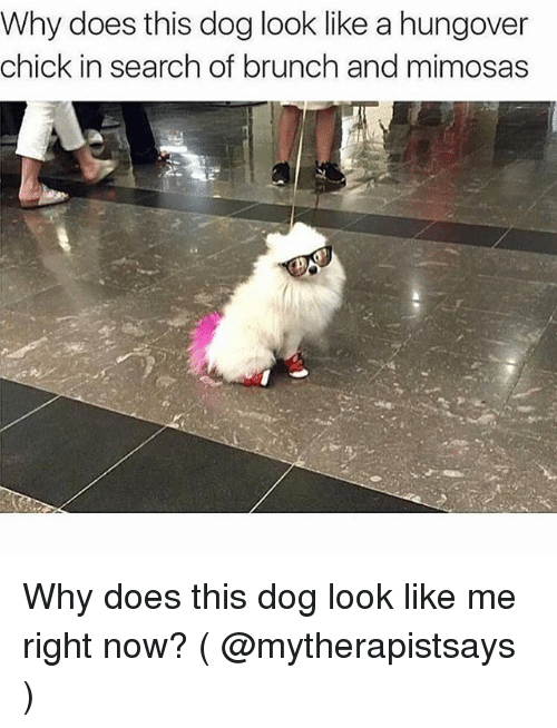 Search, Girl Memes, and Dog: Why does this dog look like a hungover  chick in search of brunch and mimosas Why does this dog look like me right now? ( @mytherapistsays )